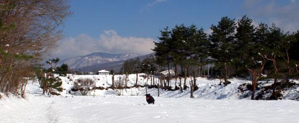 雪原を走る黒ラブラドールのサフラン