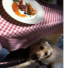 軽井沢の美味しいイタリア料理店アダージオは犬連れ可能
