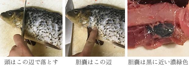 鯉の捌き方を写真で解説