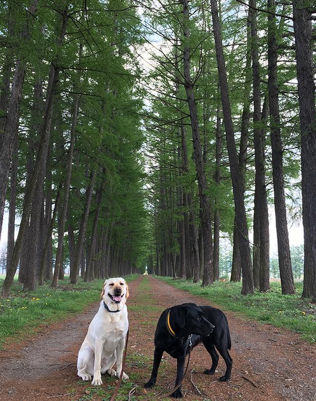 犬の散歩に適した散歩道が佐久市駒場公園にある