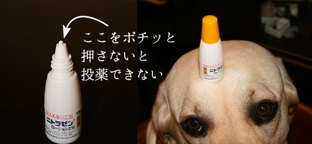 犬の耳の病気マラセチアの治療