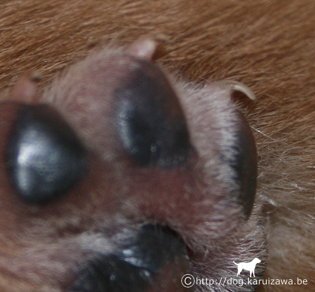生後七日の子犬の爪には人間の幼児用が便利だ
