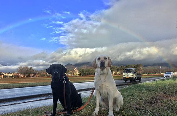 ラブラドール・レトリバーと虹の写真
