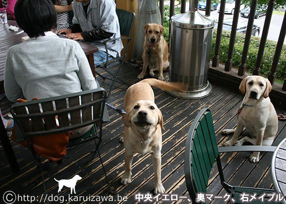 ミシェラドーロ トラットリアで犬と食事
